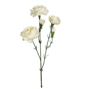Bilde av Elegant nellik - hvit