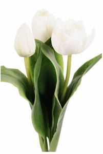 Bilde av Tulipan - hvit