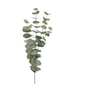 Bilde av Eucalyptus - 60 cm